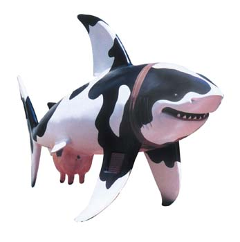 The Shark statue called Moo